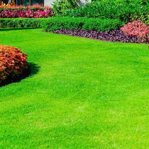 Complete Lawn Care