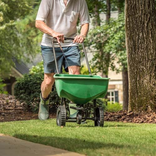 Overseeding aeration and fertilization services